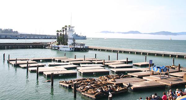 Zeeleeuwen op Pier 39 in San Francisco