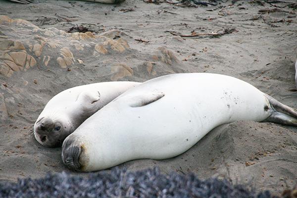 Mama-zeekoe en zeekalfje